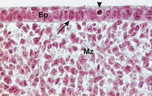 articulo cientifico sobre embriologia